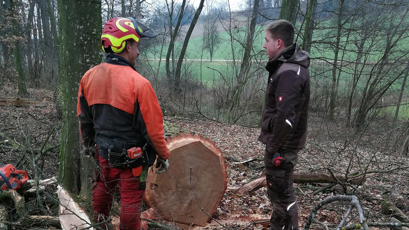Rundholzeinkauf für Baumscheiben